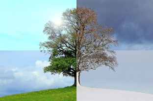 arbre saisons